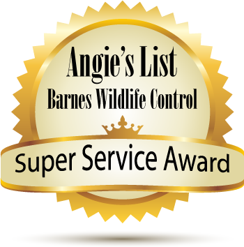 Angie's List award for honest pest control company in Dayton Ohio